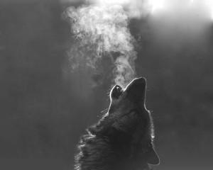 wolf cold breath