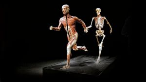 Bodyworld runner