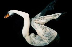 Human Swan by Gesine Marwedel3
